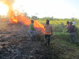 Extinguishing invasive grass fire