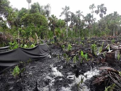 Oil Spill recorded in December in Pacaya Samira